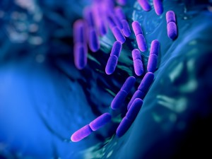Lactobabacillus bacteria
